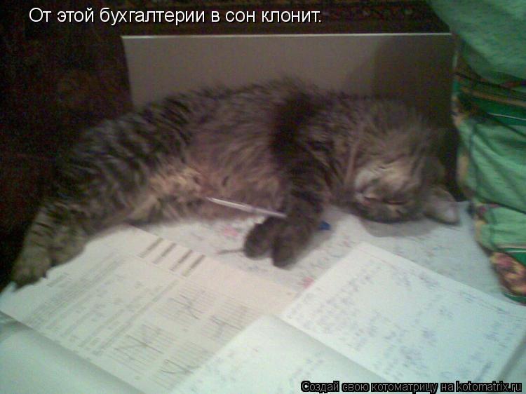 Котоматрица: От этой бухгалтерии в сон клонит.