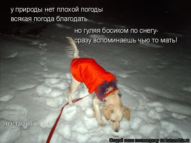 Котоматрица: у природы нет плохой погоды всякая погода благодать... но гуляя босиком по снегу- сразу вспоминаешь чью то мать!
