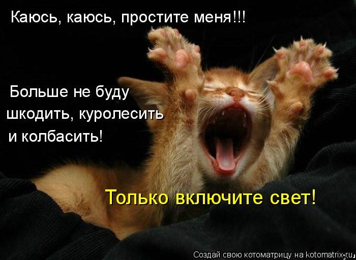 Котоматрица: Каюсь, каюсь, простите меня!!! Больше не буду шкодить, куролесить и колбасить! Только включите свет!