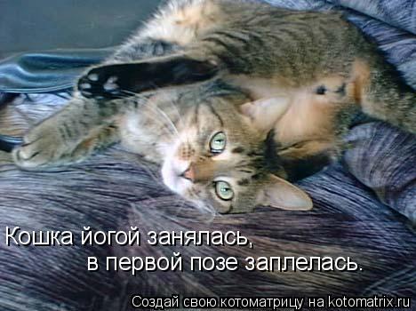 Котоматрица: Кошка йогой занялась,  в первой позе заплелась.
