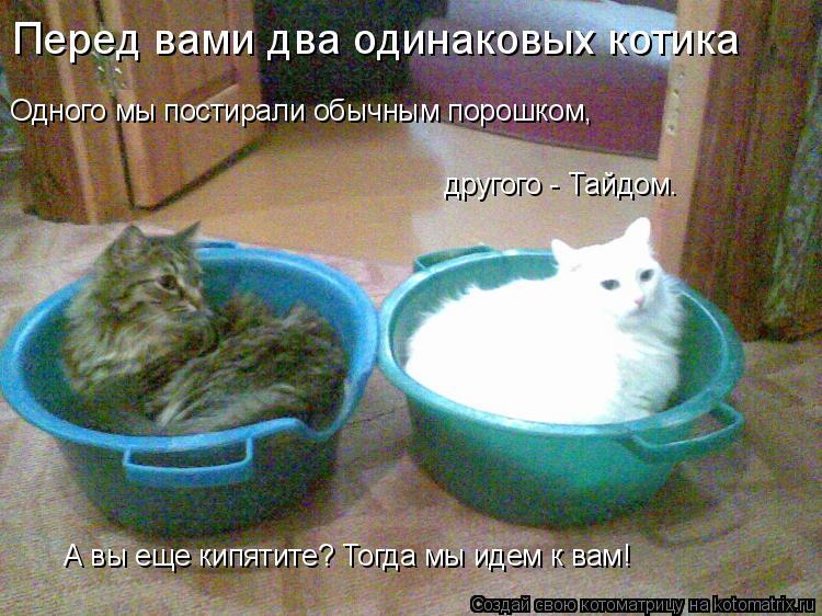Котоматрица: Одного мы постирали обычным порошком, Перед вами два одинаковых котика другого - Тайдом. А вы еще кипятите? Тогда мы идем к вам!
