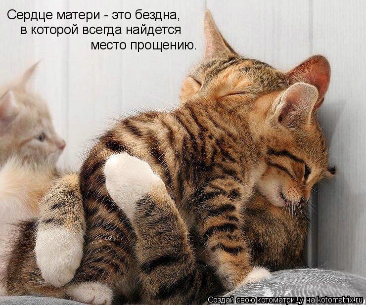Котоматрица: Сердце матери - это бездна, в которой всегда найдется  место прощению.