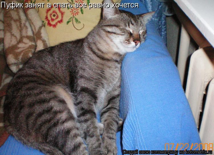 Котоматрица: Пуфик занят а спать все равно хочется