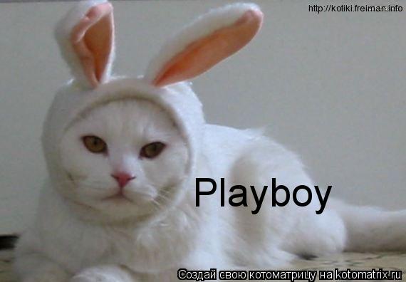 Котоматрица: Playboy