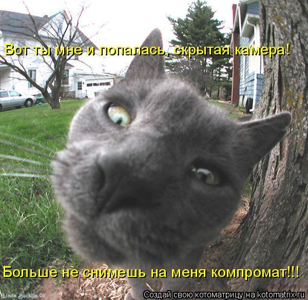 Котоматрица: Вот ты мне и попалась, скрытая камера! Больше не снимешь на меня компромат!!!