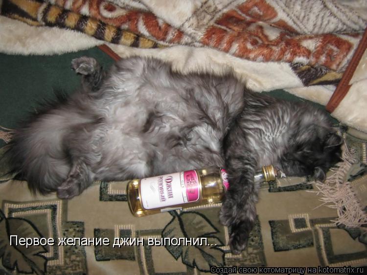 Котоматрица: Первое желание джин выполнил...