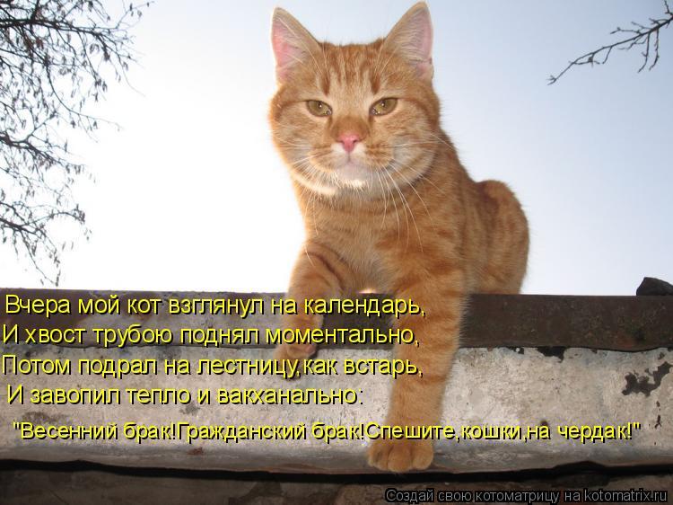 """Котоматрица: Вчера мой кот взглянул на календарь, И хвост трубою поднял моментально, Потом подрал на лестницу,как встарь, И завопил тепло и вакханально: """""""