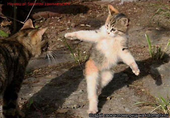 Котоматрица: Не мешай балетом заниматься!!!