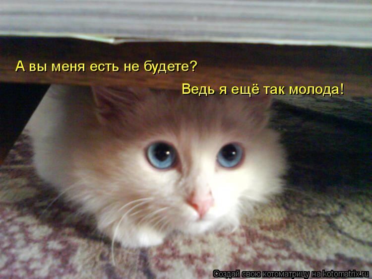 Котоматрица: А вы меня есть не будете? Ведь я ещё так молода!