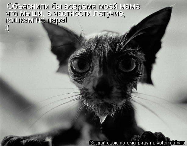 Котоматрица: Объяснили бы вовремя моей маме что мыши, в частности летучие,  кошкам не пара!  :(
