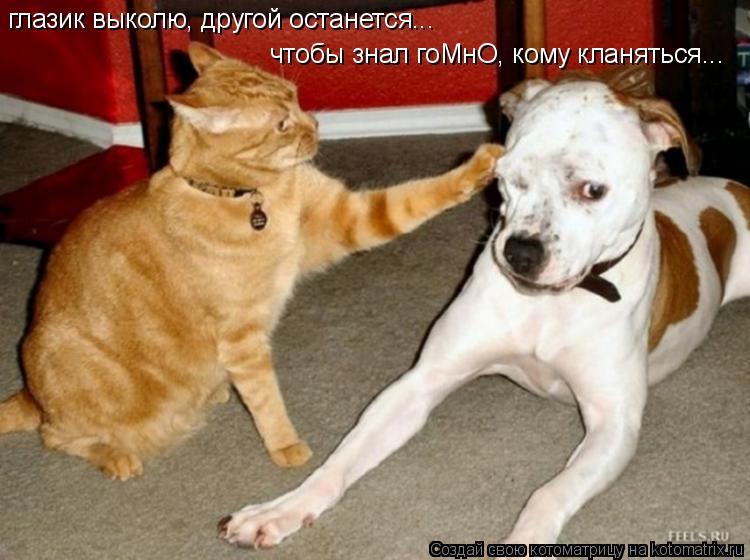 Котоматрица: глазик выколю, другой останется... чтобы знал гоМнО, кому кланяться...
