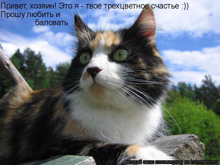 Котоматрица: Привет, хозяин! Это я - твое трехцветное счастье :)) Прошу любить и баловать