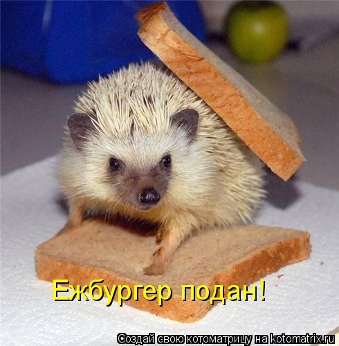 Котоматрица: Ежбургер подан!