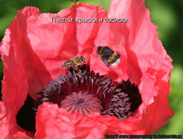 Котоматрица: Пчёлки, крыски и сосиски