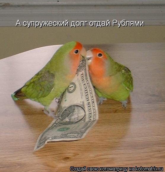 Котоматрица: А супружеский долг отдай Рублями