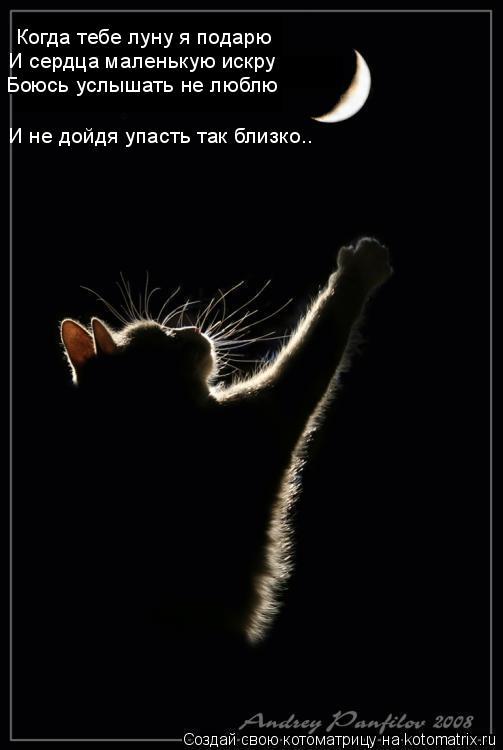 Котоматрица: Когда тебе луну я подарю   И сердца маленькую искру Боюсь услышать не люблю И не дойдя упасть так близко..