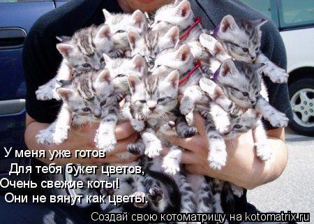Котоматрица: У меня уже готов Для тебя букет цветов, Очень свежие коты! Они не вянут как цветы.