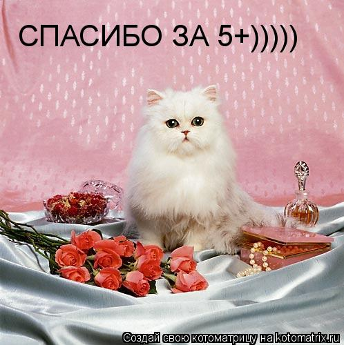 Котоматрица: СПАСИБО ЗА 5+)))))
