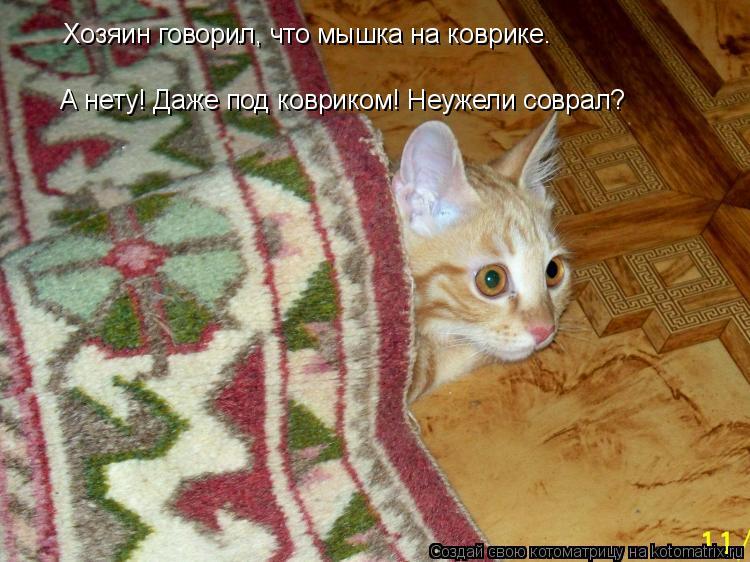 Котоматрица: Хозяин говорил, что мышка на коврике. А нету! Даже под ковриком! Неужели соврал?