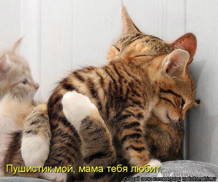 Котоматрица: Пушистик мой, мама тебя любит.