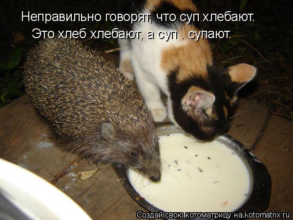 Котоматрица: Неправильно говорят, что суп хлебают.  Это хлеб хлебают, а суп — супают.