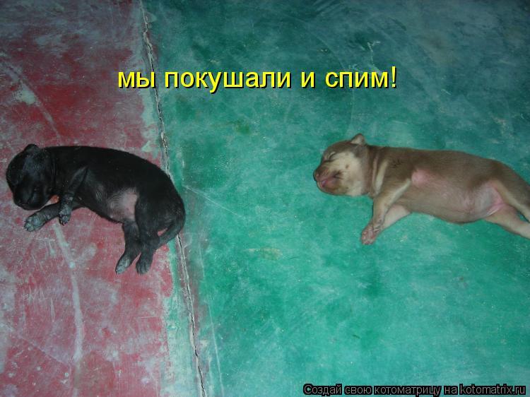 Котоматрица: мы покушали и спим!