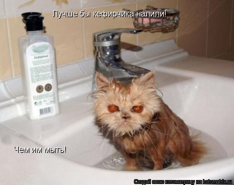 Котоматрица: Лучше бы кефирчика налили! Чем им мыть!