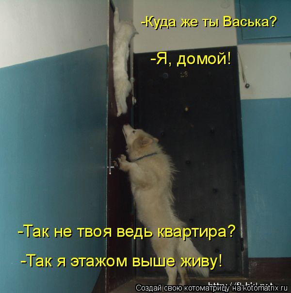 Котоматрица: -Так я этажом выше живу! -Так не твоя ведь квартира? -Куда же ты Васька?  -Я, домой!