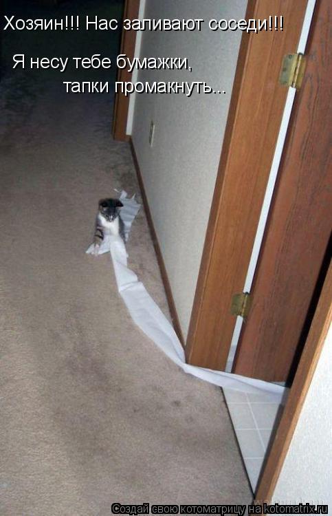 Котоматрица: Хозяин!!! Нас заливают соседи!!! Я несу тебе бумажки,  тапки промакнуть...