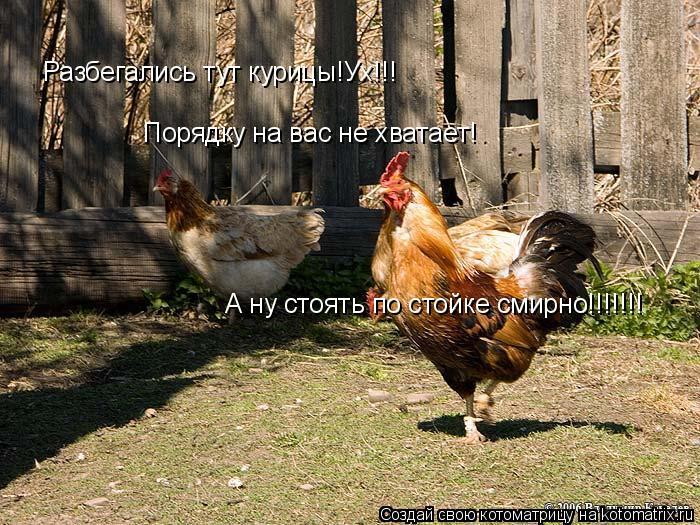 Котоматрица: Разбегались тут курицы!Ух!!! Порядку на вас не хватает! А ну стоять по стойке смирно!!!!!!!