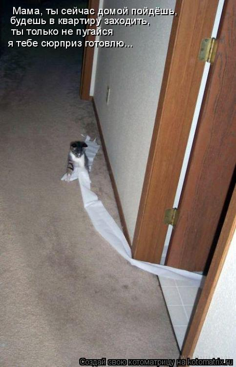 Котоматрица: Мама, ты сейчас домой пойдёшь,   будешь в квартиру заходить,   ты только не пугайся я тебе сюрприз готовлю...