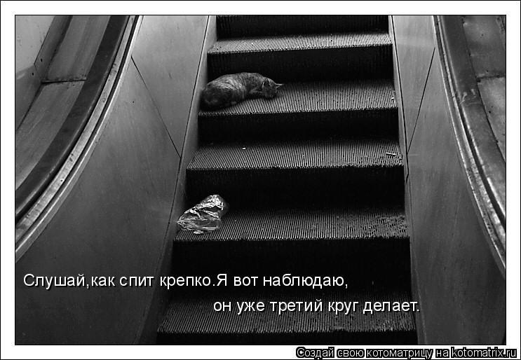 Котоматрица: Слушай,как спит крепко.Я вот наблюдаю, он уже третий круг делает.