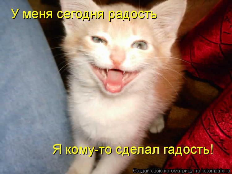 Котоматрица: У меня сегодня радость Я кому-то сделал гадость!