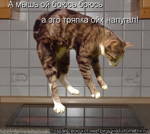 Котоматрица: А мышь ой боюсь боюсь а это тряпка ойх напугал!