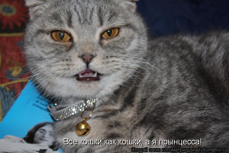 Котоматрица: Все кошки как кошки, а я прынцесса!