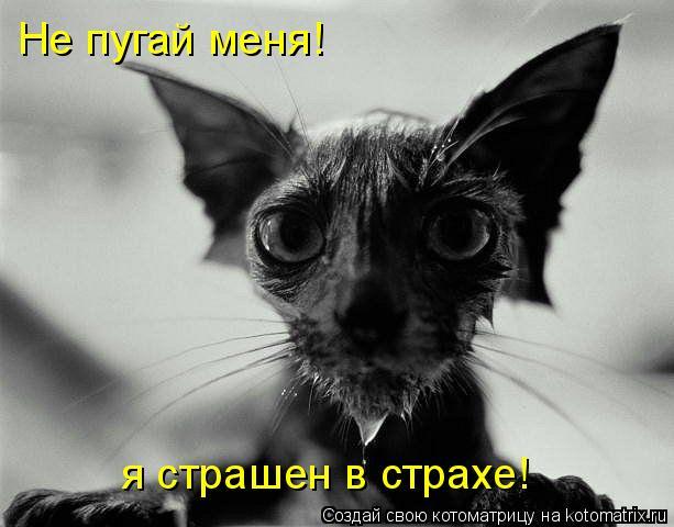 Котоматрица: Не пугай меня! я страшен в страхе!