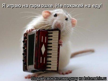 Котоматрица: Я играю на гармошке, Не похожей на еду!
