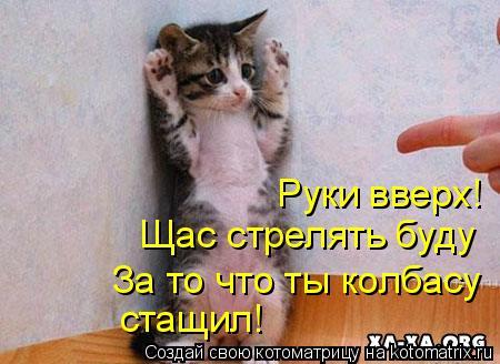 Котоматрица: Руки вверх! Щас стрелять буду За то что ты колбасу стащил!