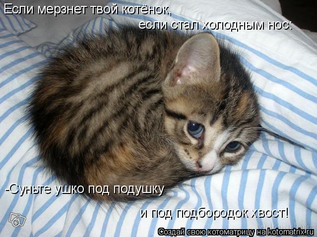Котоматрица: Если мерзнет твой котёнок,  если стал холодным нос: -Суньте ушко под подушку  и под подбородок хвост!
