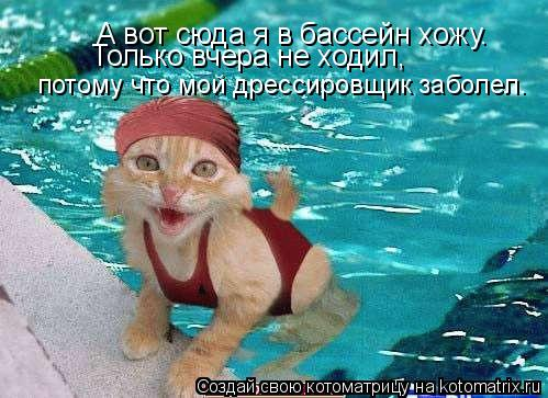 Котоматрица: А вот сюда я в бассейн хожу.  Только вчера не ходил,  потому что мой дрессировщик заболел.