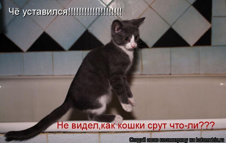 Котоматрица: Чё уставился!!!!!!!!!!!!!!!!!!!! Не видел,как кошки срут что-ли???