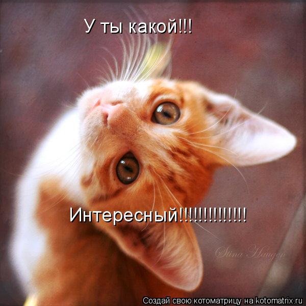 Котоматрица: У ты какой!!! Интересный!!!!!!!!!!!!!!