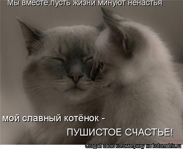 Котоматрица: Мы вместе,пусть жизни минуют ненастья мой славный котёнок -  ПУШИСТОЕ СЧАСТЬЕ!