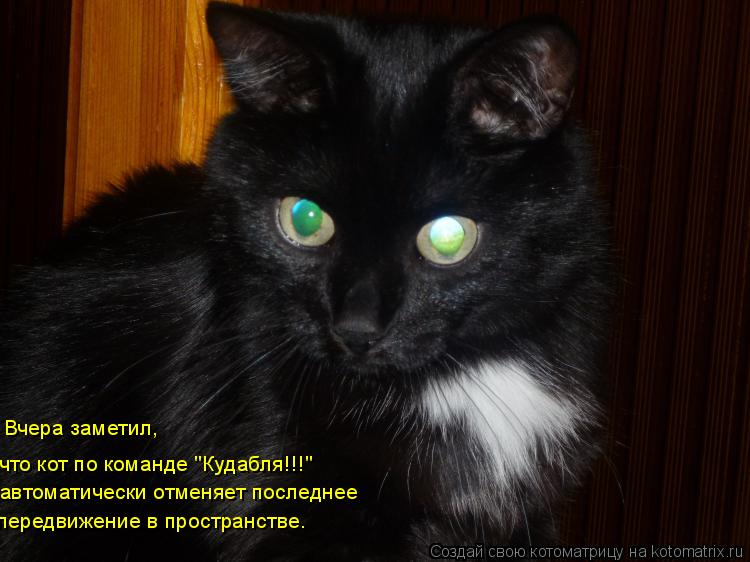 """Котоматрица: Вчера заметил,  что кот по команде """"Кудабля!!!"""" автоматически отменяет последнее  передвижение в пространстве."""