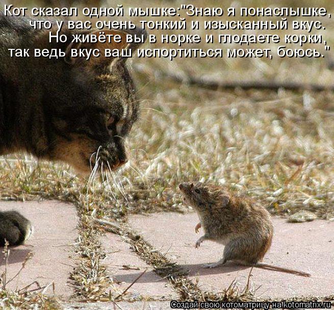 """Котоматрица: Кот сказал одной мышке:""""Знаю я понаслышке, что у вас очень тонкий и изысканный вкус. Но живёте вы в норке и глодаете корки, так ведь вкус ваш и"""