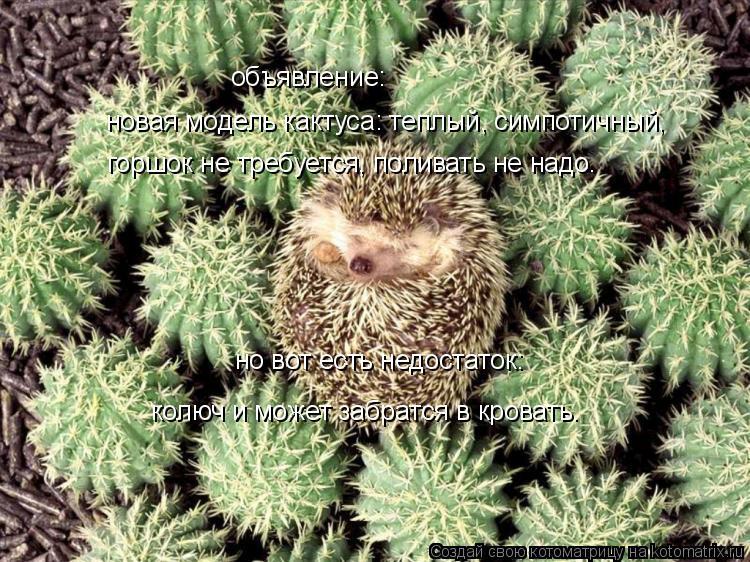 Котоматрица: объявление: новая модель кактуса: теплый, симпотичный, горшок не требуется, поливать не надо. но вот есть недостаток:  колюч и может забратся