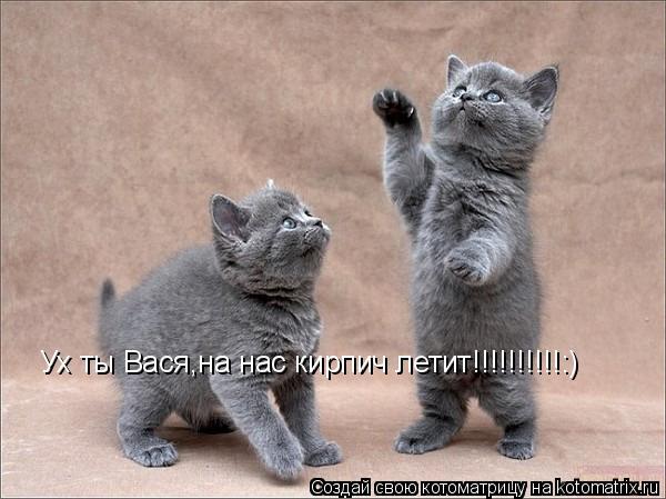 Котоматрица: Ух ты Вася,на нас кирпич летит!!!!!!!!!!:)