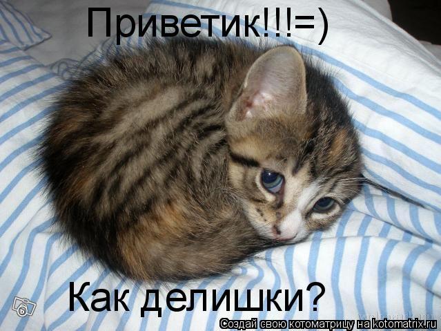 Котоматрица: Приветик!!!=) Как делишки?