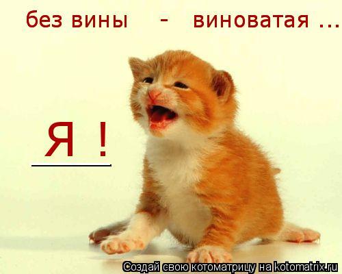 Котоматрица: без вины    -   виноватая .... без вины    -   виноватая .... Я !  ___