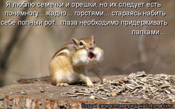 Котоматрица: Я люблю семечки и орешки, но их следует есть  понемногу... жадно... горстями... стараясь набить  себе полный рот...глаза необходимо придерживать